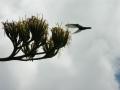 colibr_2